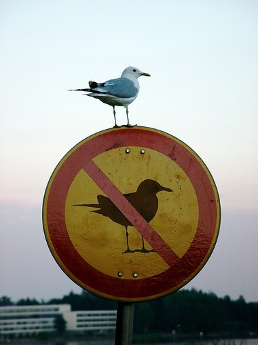 irony-bird1